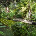 The Botanical Ark Retreat garden