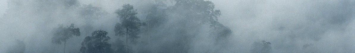 Rainforest hills and mist