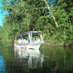Activity_Daintree River cruise