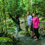 Activity_guided rainforest tour