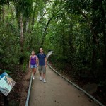 Walking in the Daintree National Park, Cape Tribulation section, tropical north Queensland, Australia