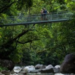 Mossman_Gorge_swing_bridgeLR