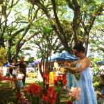 Saturday morning markets at Mossman, tropical north Queensland